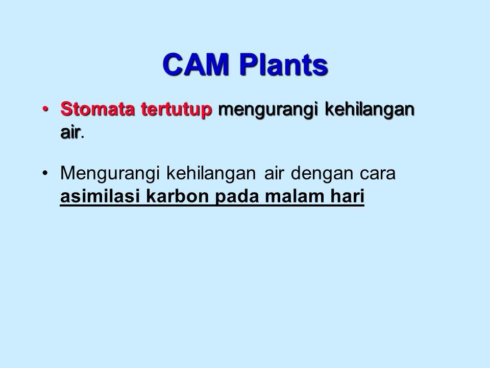 CAM Plants Stomata tertutup mengurangi kehilangan air.