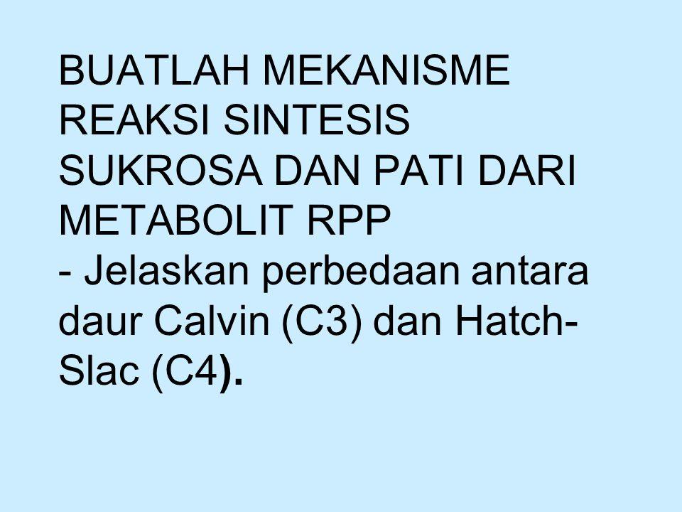 TUGAS BUATLAH MEKANISME REAKSI SINTESIS SUKROSA DAN PATI DARI METABOLIT RPP - Jelaskan perbedaan antara daur Calvin (C3) dan Hatch-Slac (C4).