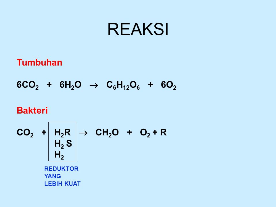 REAKSI Tumbuhan 6CO2 + 6H2O  C6H12O6 + 6O2 Bakteri