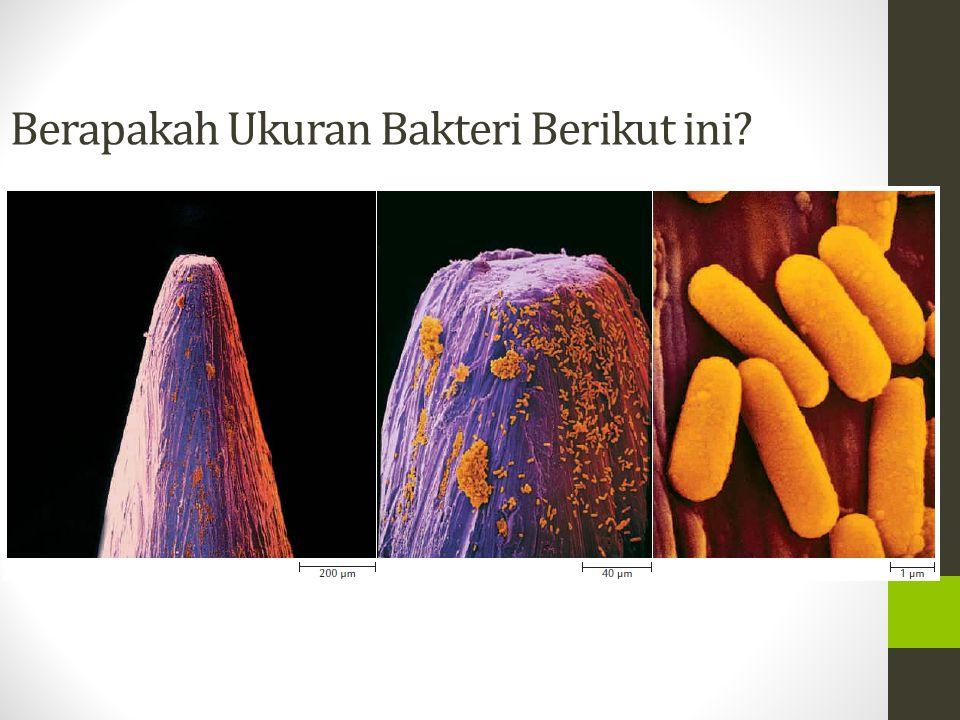 Berapakah Ukuran Bakteri Berikut ini