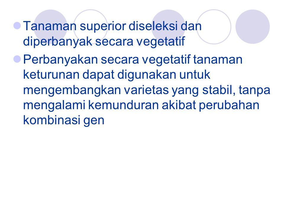 Tanaman superior diseleksi dan diperbanyak secara vegetatif