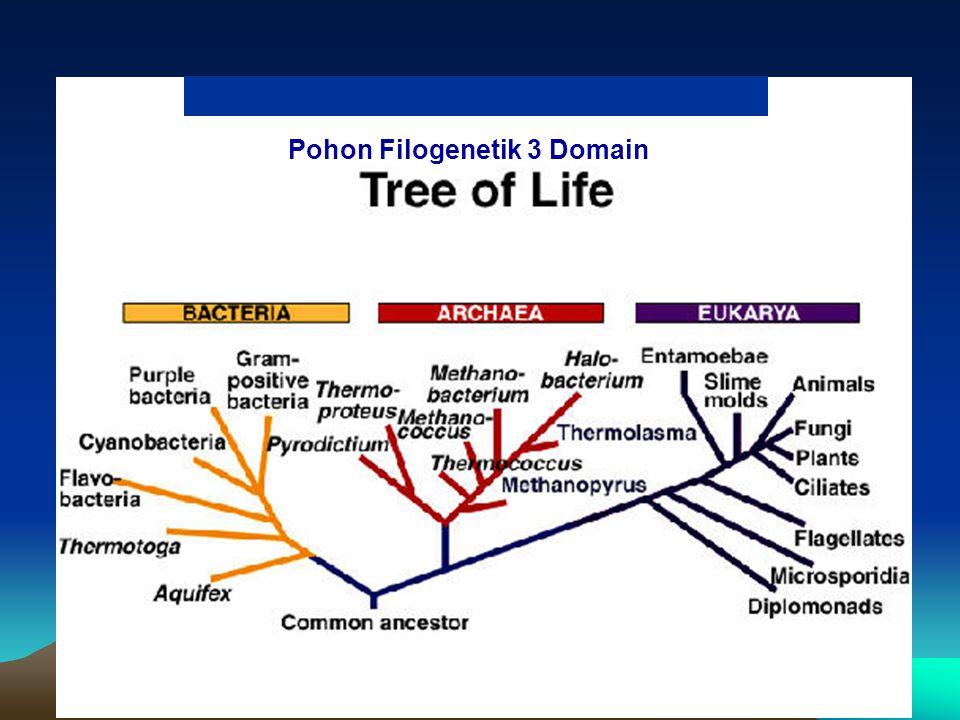 Pohon Filogenetik 3 Domain