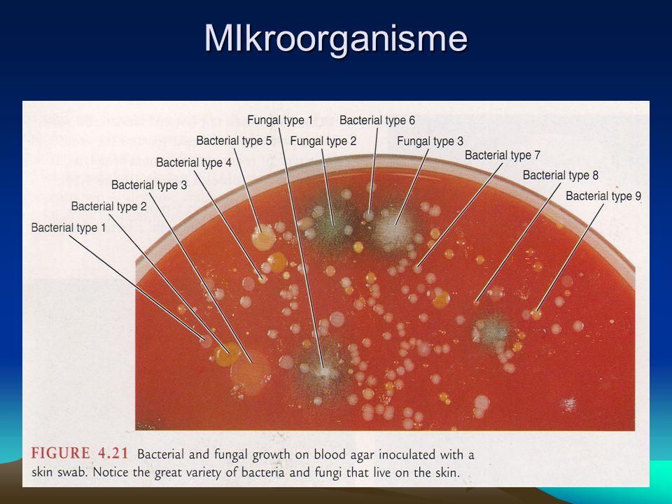 MIkroorganisme