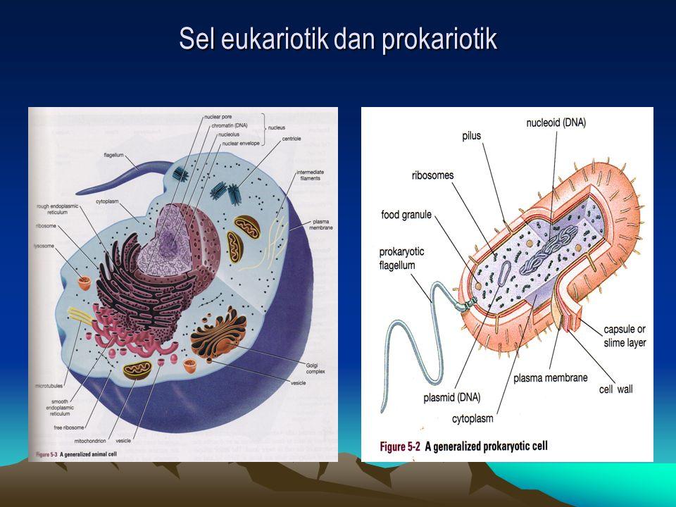 Sel eukariotik dan prokariotik