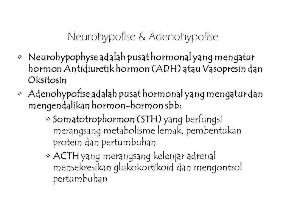 Neurohypofise & Adenohypofise