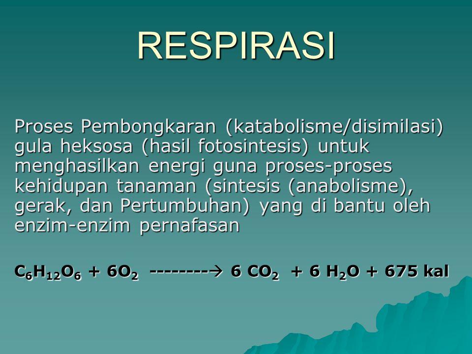RESPIRASI