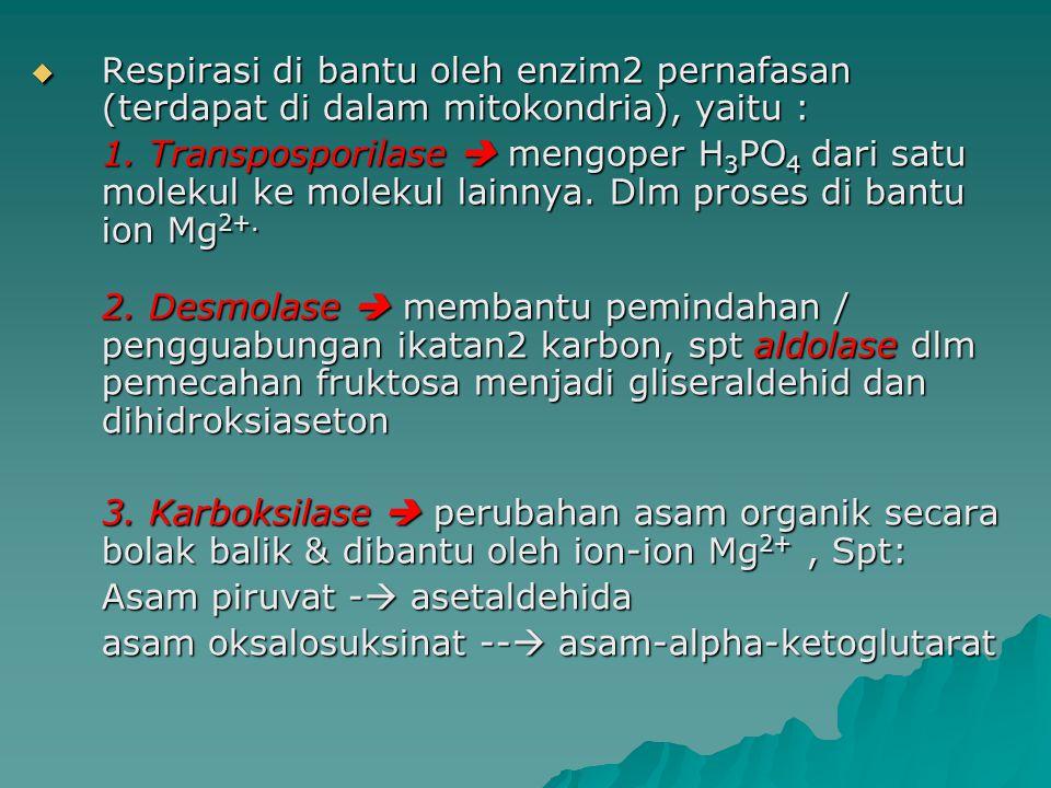 Respirasi di bantu oleh enzim2 pernafasan (terdapat di dalam mitokondria), yaitu :