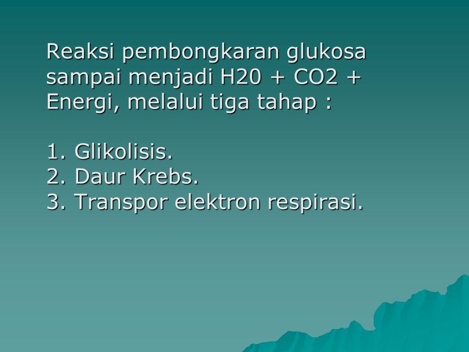 Reaksi pembongkaran glukosa sampai menjadi H20 + CO2 + Energi, melalui tiga tahap : 1.