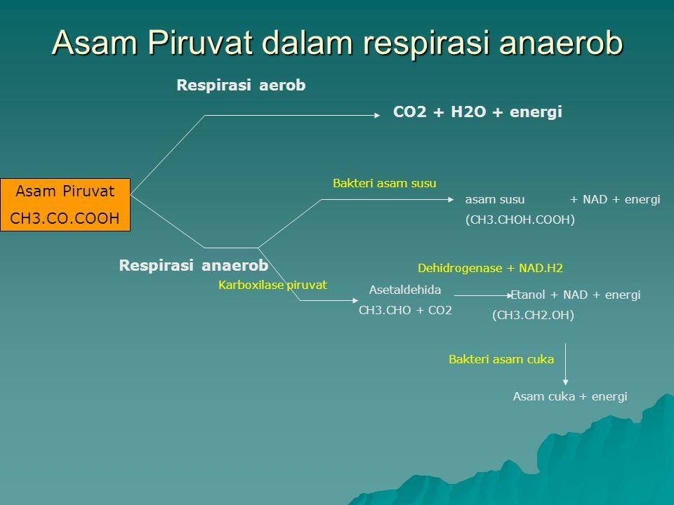 Asam Piruvat dalam respirasi anaerob