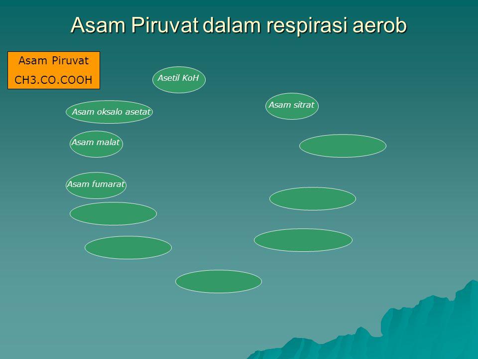 Asam Piruvat dalam respirasi aerob