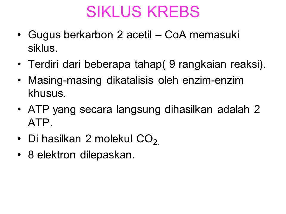 SIKLUS KREBS Gugus berkarbon 2 acetil – CoA memasuki siklus.