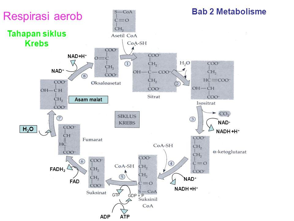 Respirasi aerob Bab 2 Metabolisme Tahapan siklus Krebs H2O NAD+H+ NAD+