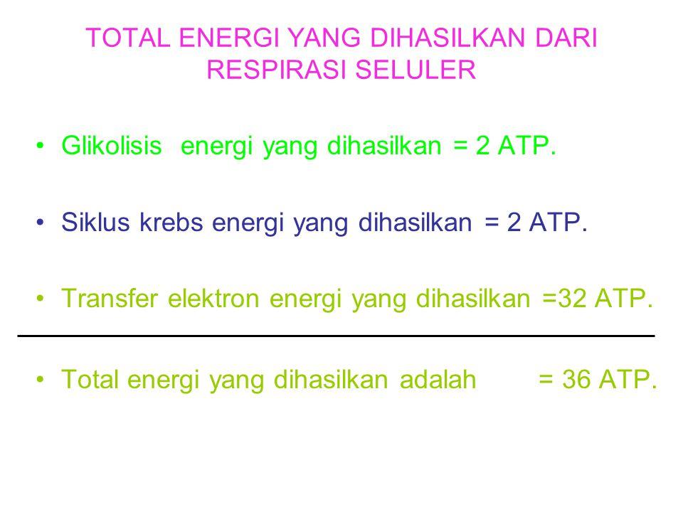 TOTAL ENERGI YANG DIHASILKAN DARI RESPIRASI SELULER
