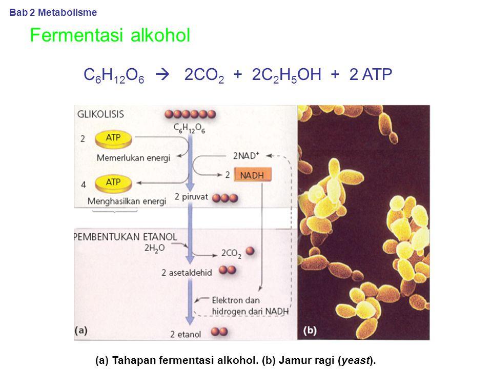 (a) Tahapan fermentasi alkohol. (b) Jamur ragi (yeast).