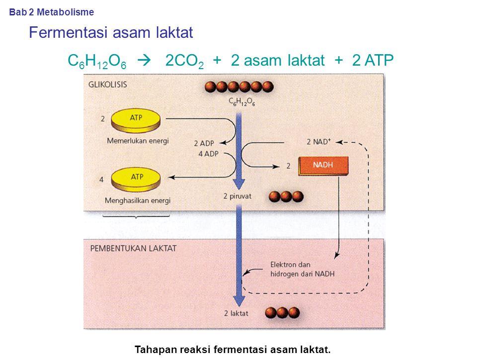 Tahapan reaksi fermentasi asam laktat.