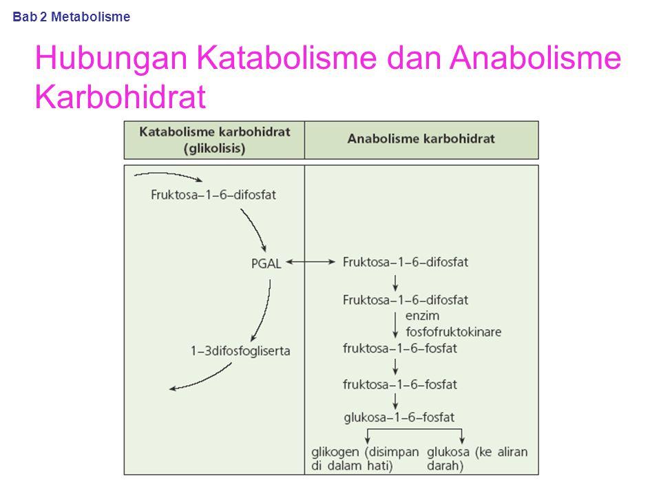 Hubungan Katabolisme dan Anabolisme Karbohidrat