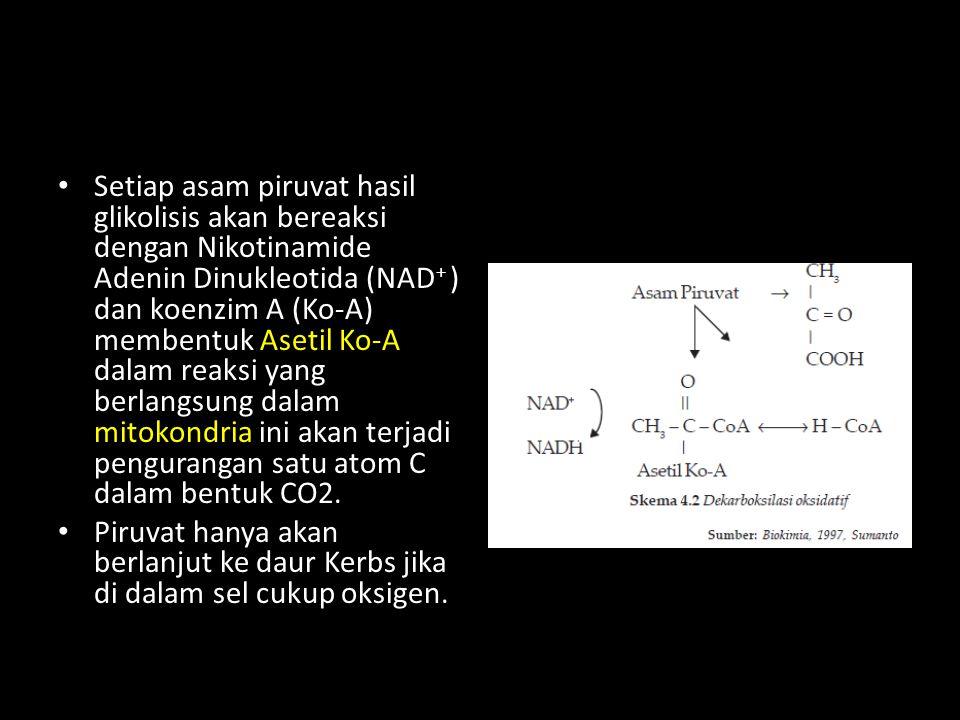 Setiap asam piruvat hasil glikolisis akan bereaksi dengan Nikotinamide Adenin Dinukleotida (NAD+ ) dan koenzim A (Ko-A) membentuk Asetil Ko-A dalam reaksi yang berlangsung dalam mitokondria ini akan terjadi pengurangan satu atom C dalam bentuk CO2.