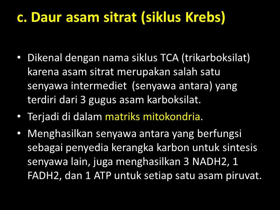 c. Daur asam sitrat (siklus Krebs)