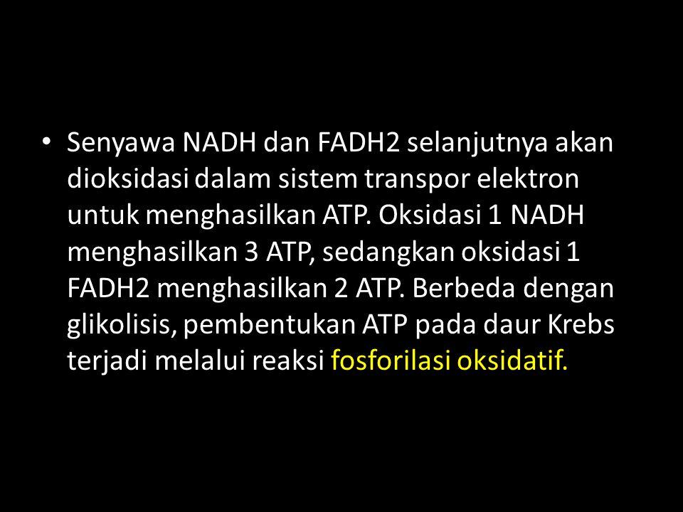 Senyawa NADH dan FADH2 selanjutnya akan dioksidasi dalam sistem transpor elektron untuk menghasilkan ATP.