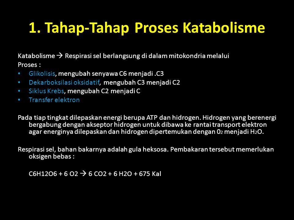 1. Tahap-Tahap Proses Katabolisme