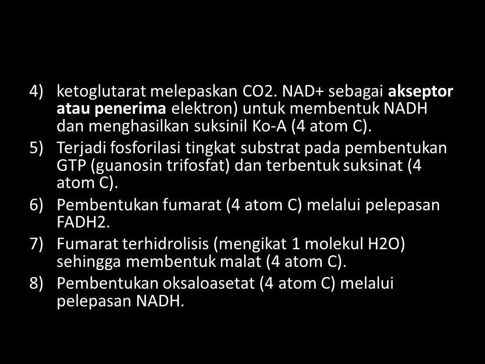 ketoglutarat melepaskan CO2