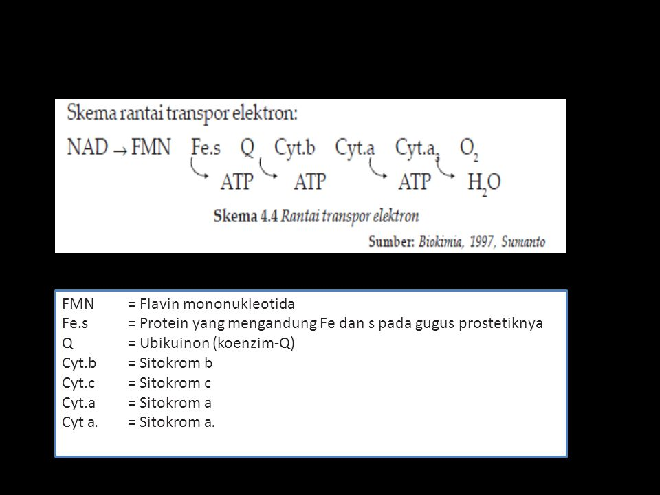 FMN = Flavin mononukleotida