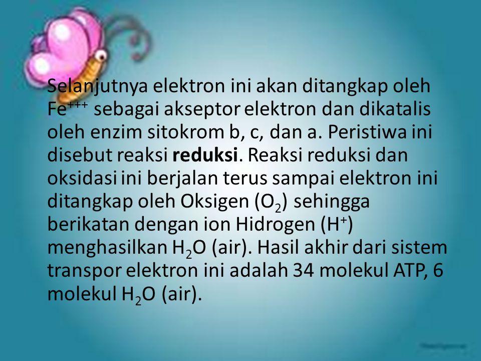 Selanjutnya elektron ini akan ditangkap oleh Fe+++ sebagai akseptor elektron dan dikatalis oleh enzim sitokrom b, c, dan a.