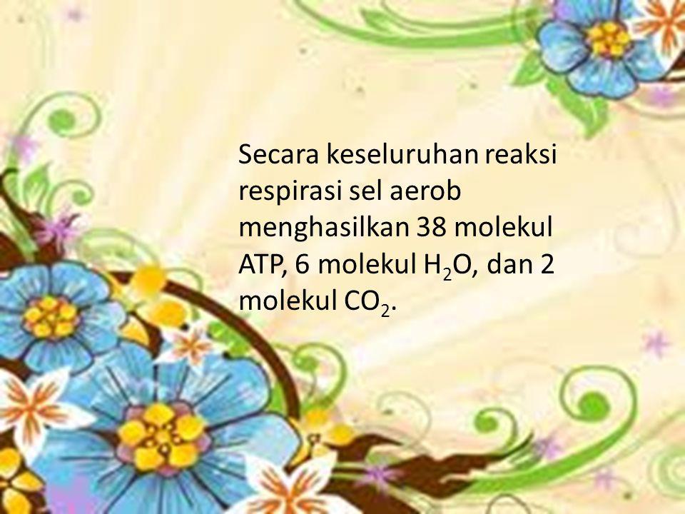 Secara keseluruhan reaksi respirasi sel aerob menghasilkan 38 molekul ATP, 6 molekul H2O, dan 2 molekul CO2.