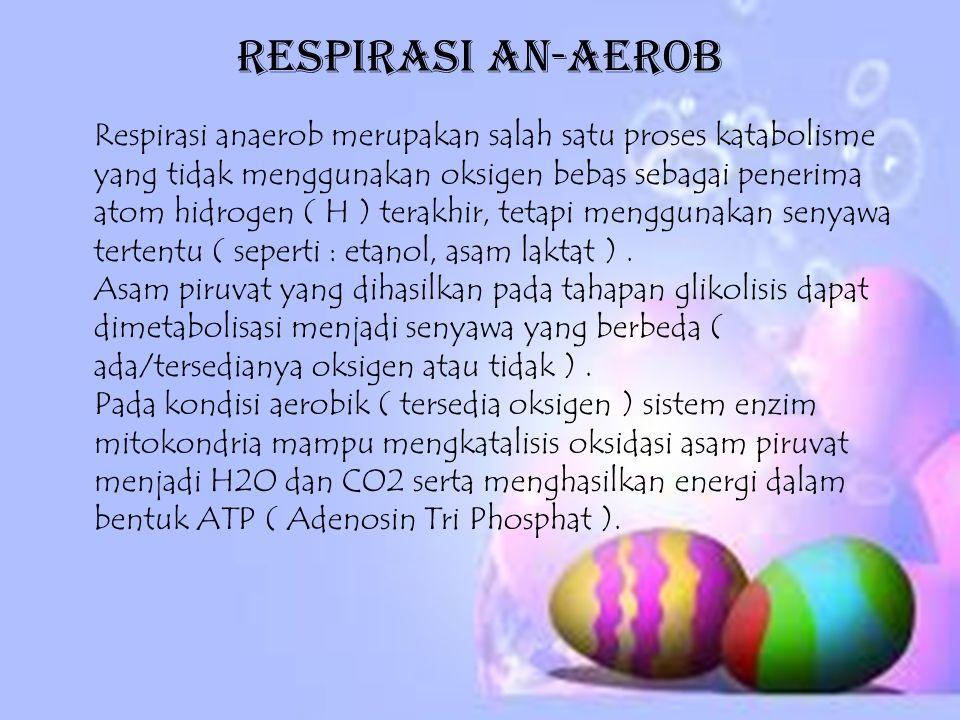 Respirasi An-aerob