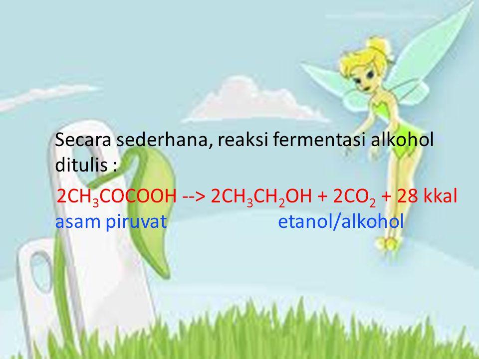 Secara sederhana, reaksi fermentasi alkohol ditulis : 2CH3COCOOH --> 2CH3CH2OH + 2CO2 + 28 kkal asam piruvat etanol/alkohol