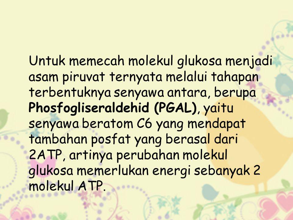 Untuk memecah molekul glukosa menjadi asam piruvat ternyata melalui tahapan terbentuknya senyawa antara, berupa Phosfogliseraldehid (PGAL), yaitu senyawa beratom C6 yang mendapat tambahan posfat yang berasal dari 2ATP, artinya perubahan molekul glukosa memerlukan energi sebanyak 2 molekul ATP.
