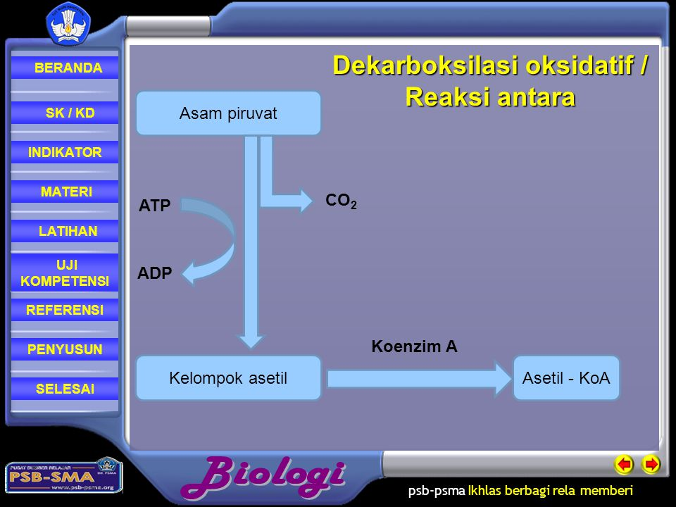 Dekarboksilasi oksidatif / Reaksi antara