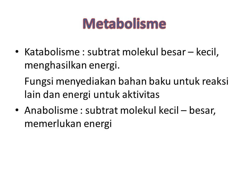 Metabolisme Katabolisme : subtrat molekul besar – kecil, menghasilkan energi.