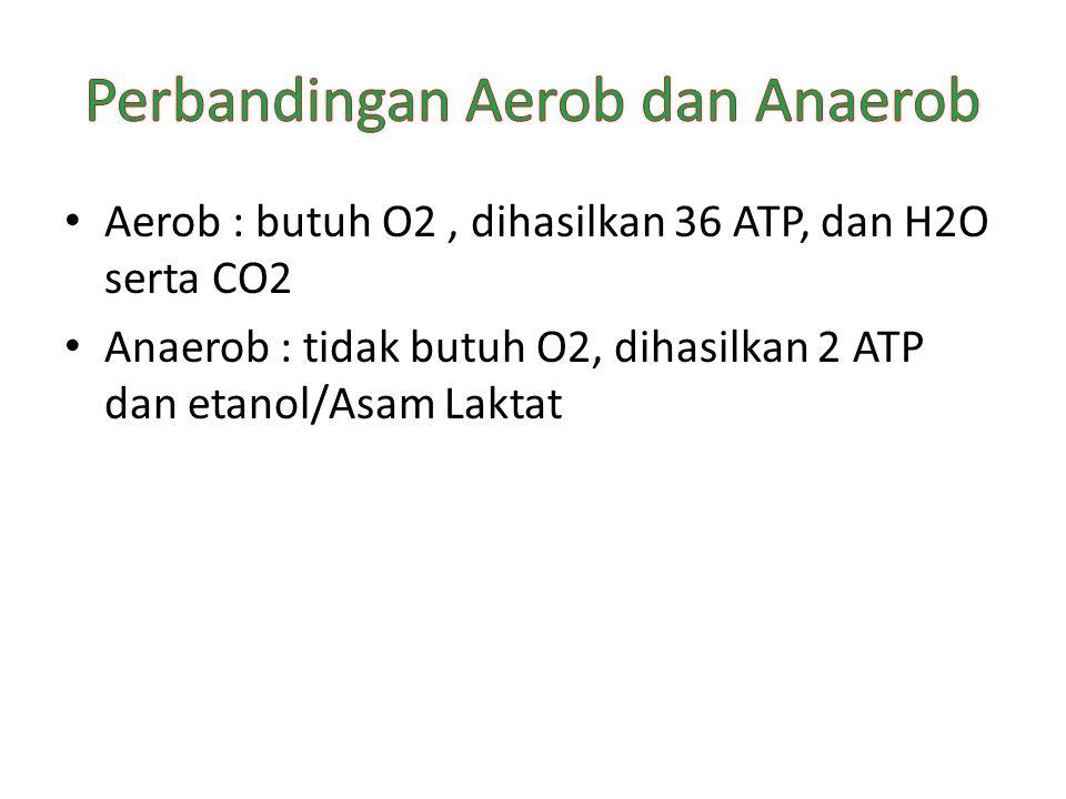 Perbandingan Aerob dan Anaerob