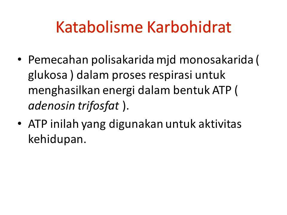 Katabolisme Karbohidrat