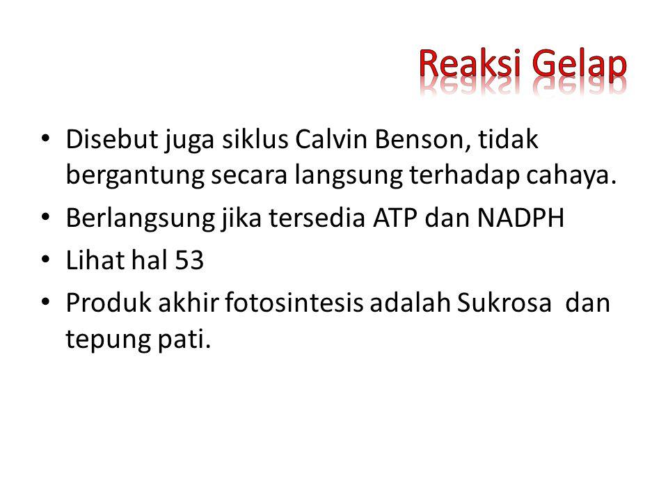 Reaksi Gelap Disebut juga siklus Calvin Benson, tidak bergantung secara langsung terhadap cahaya. Berlangsung jika tersedia ATP dan NADPH.