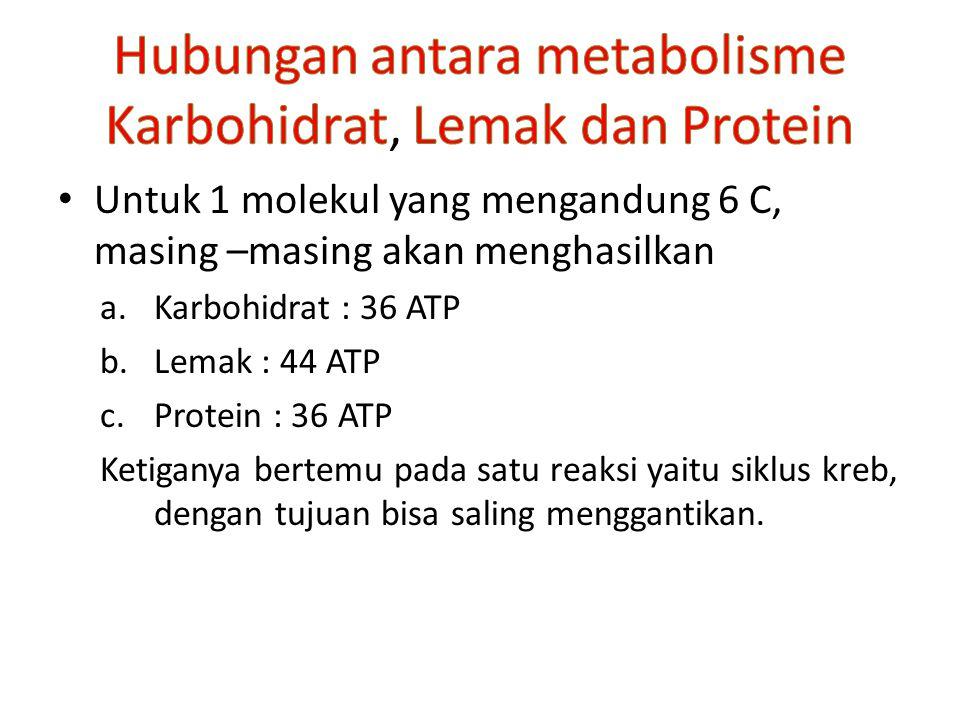 Hubungan antara metabolisme Karbohidrat, Lemak dan Protein