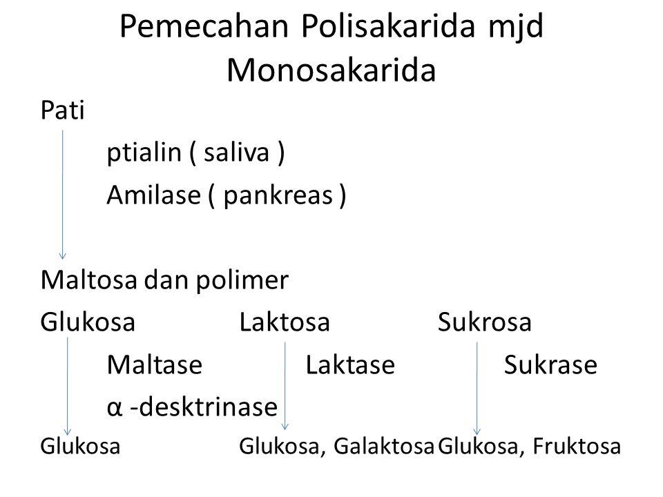 Pemecahan Polisakarida mjd Monosakarida