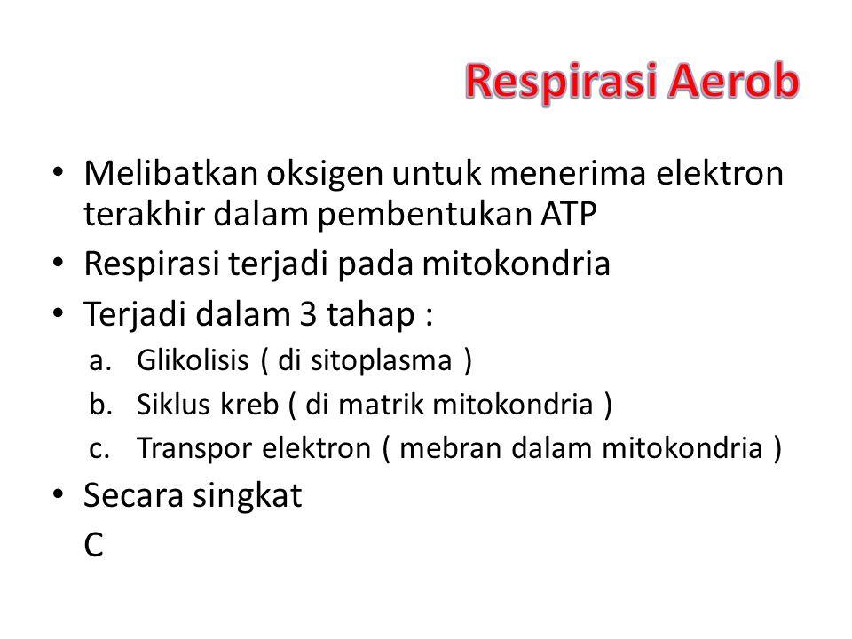 Respirasi Aerob Melibatkan oksigen untuk menerima elektron terakhir dalam pembentukan ATP. Respirasi terjadi pada mitokondria.