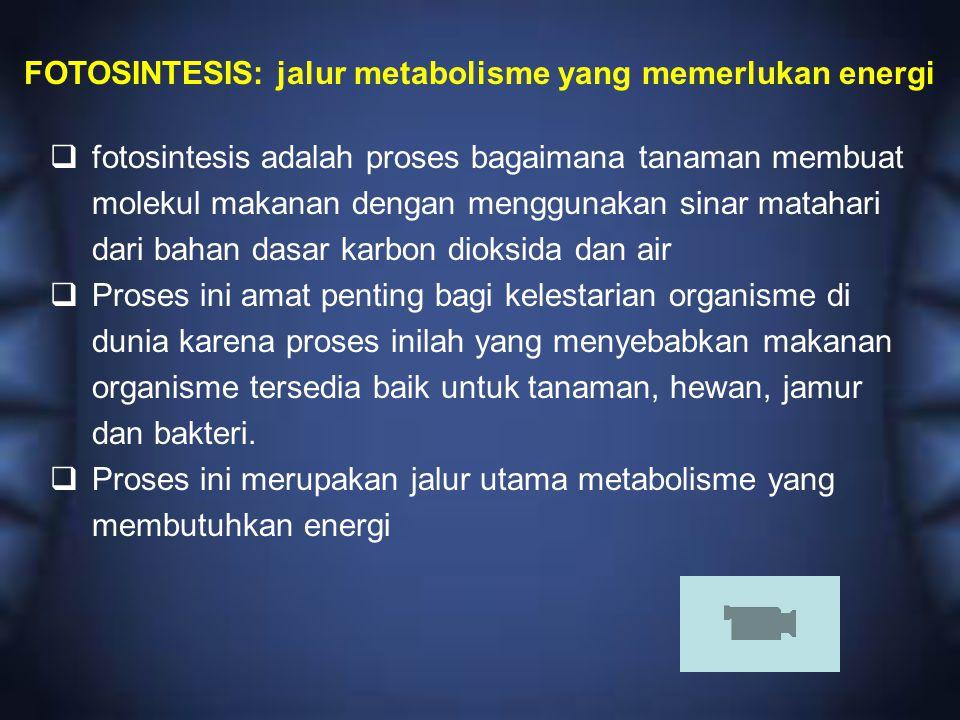 FOTOSINTESIS: jalur metabolisme yang memerlukan energi