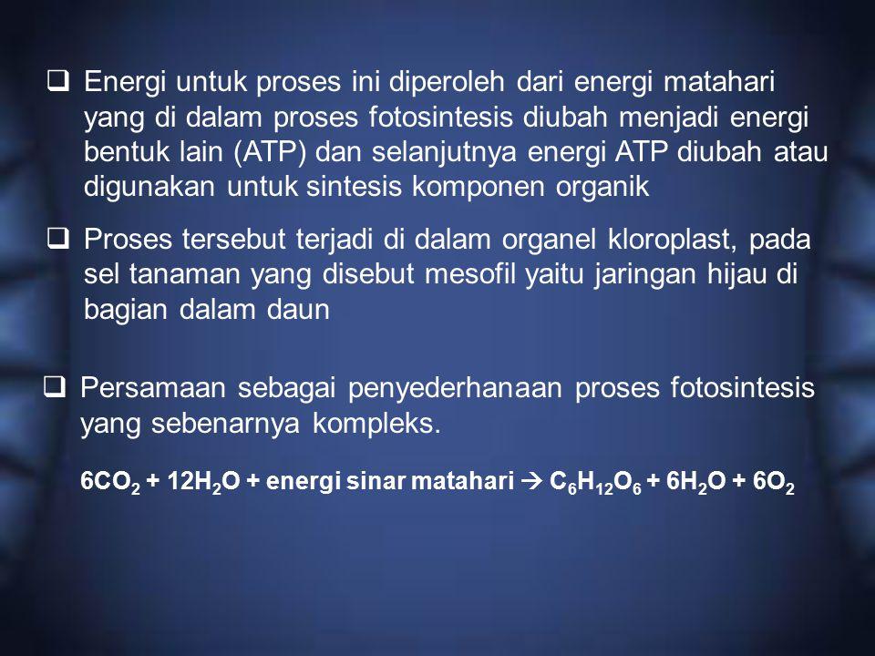 6CO2 + 12H2O + energi sinar matahari  C6H12O6 + 6H2O + 6O2