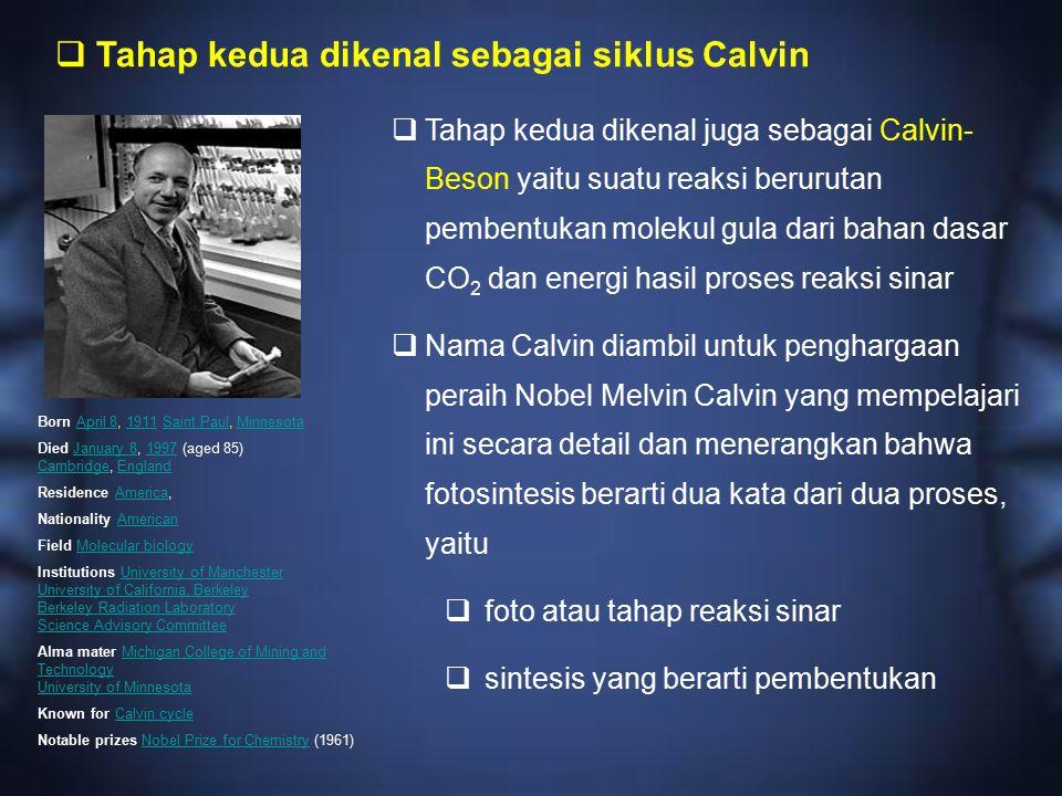 Tahap kedua dikenal sebagai siklus Calvin