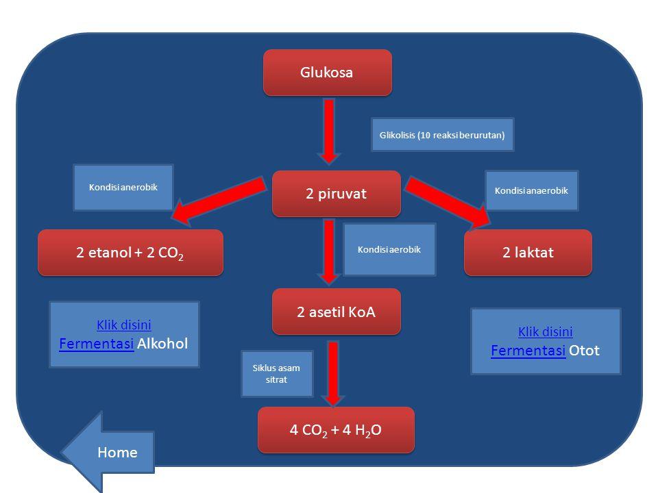 Glikolisis (10 reaksi berurutan)