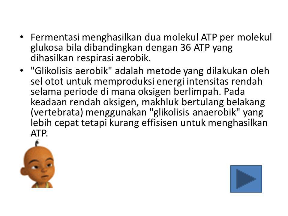 Fermentasi menghasilkan dua molekul ATP per molekul glukosa bila dibandingkan dengan 36 ATP yang dihasilkan respirasi aerobik.
