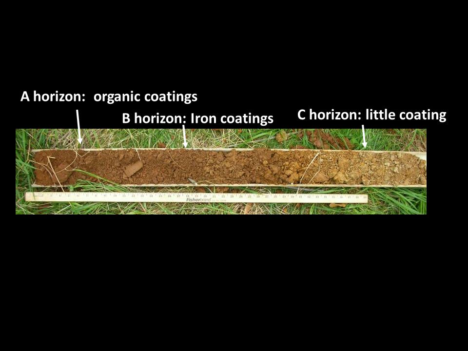 A horizon: organic coatings