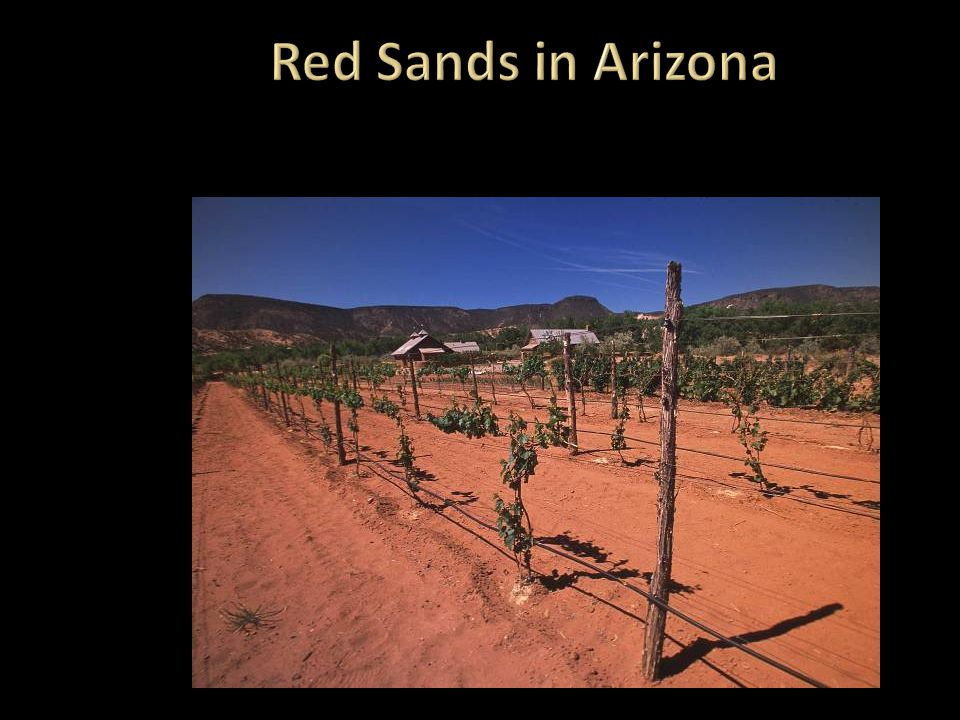 Red Sands in Arizona The red sand color is inherited.