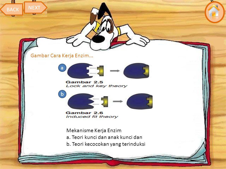 NEXT BACK. Gambar Cara Kerja Enzim... a. b. Mekanisme Kerja Enzim a.