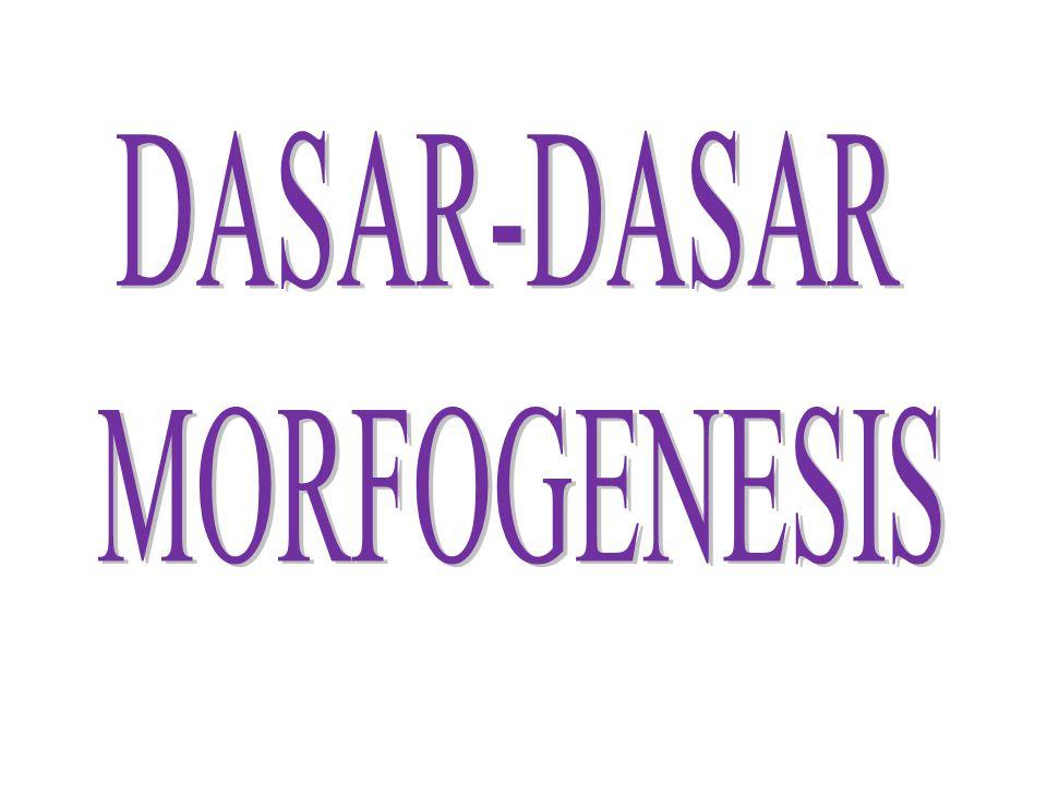 DASAR-DASAR MORFOGENESIS