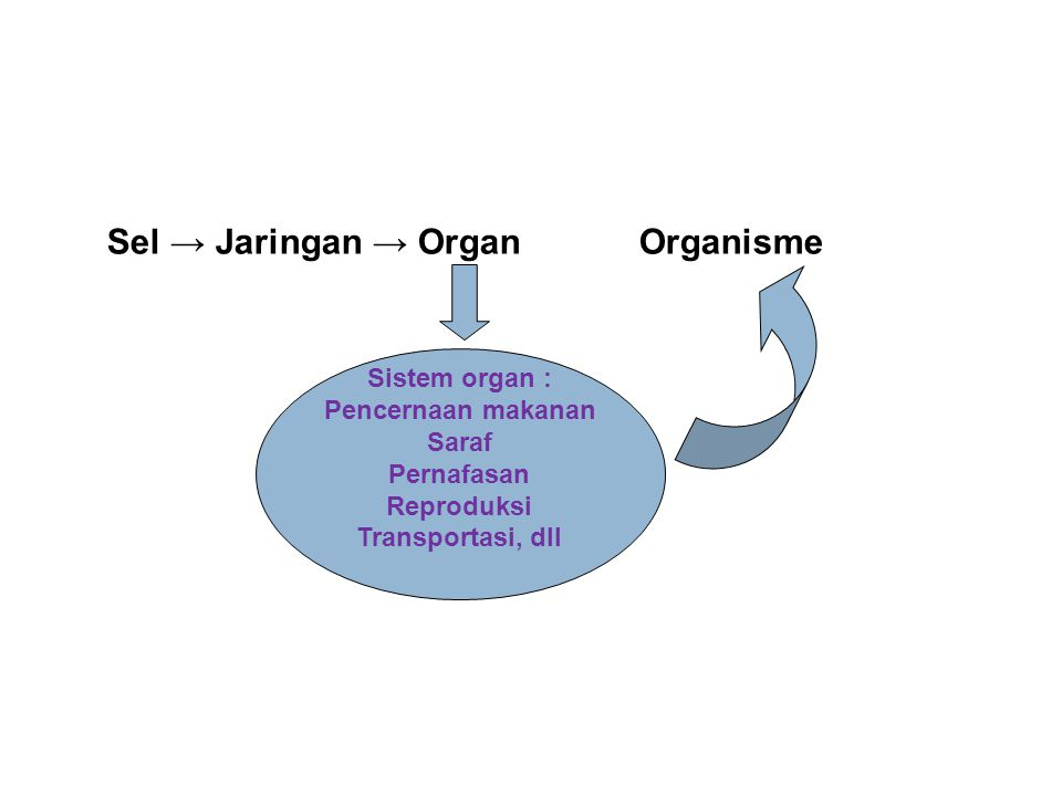 Sel → Jaringan → Organ Organisme