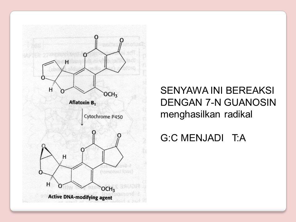 SENYAWA INI BEREAKSI DENGAN 7-N GUANOSIN menghasilkan radikal G:C MENJADI T:A
